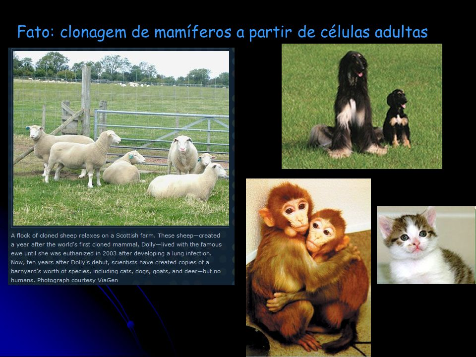 SCIENCE VOL 308 17 JUNE 2005 Ficção: clonagem humana