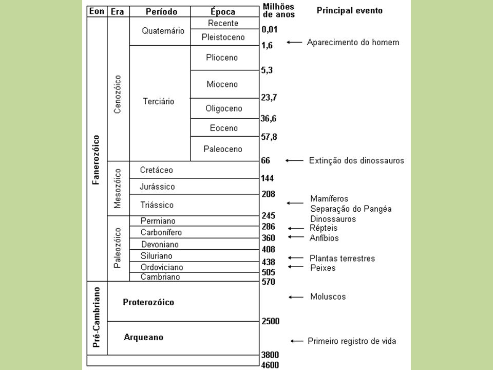 Urochordata 2000 spp.marinhas Tunicados: Ascídias, etc.