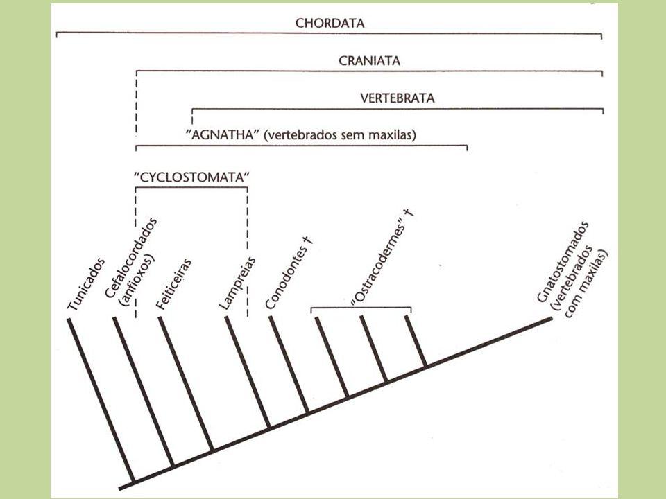 Cephalochordata 22 spp.