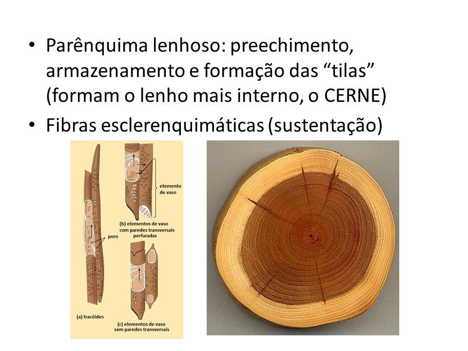 Floema ou Líber Transporta seiva elaborada (orgânica) Sentido: Partes verdes para partes vivas Tubos Crivados (cél.