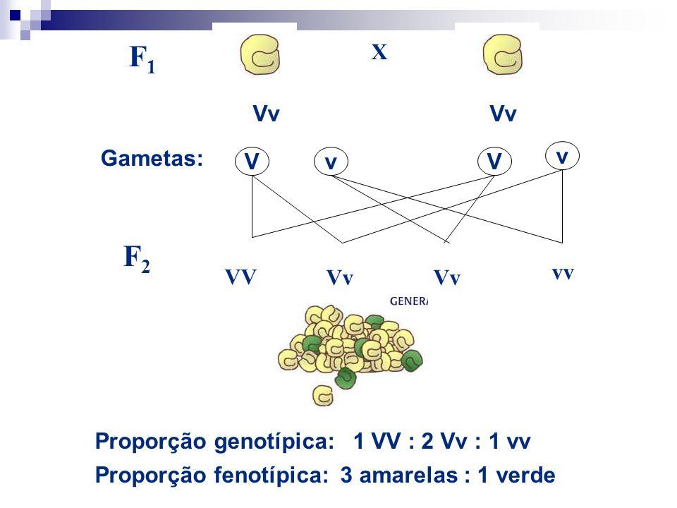 Os 3 primeiros postulados de Mendel 1.PARES DE FATORES UNITÁRIO As características genéticas são controladas por fatores unitários que existem aos pares nos organismos individuais No cruzamento mono-híbrido, existe um fator unitário específico para cada traço Todo indivíduo diplóide recebe um fator de cada genitor Uma vez que esses fatores ocorrem aos pares, são possíveis 3 combinações Ex.: 2 fatores para cor amarela (RR), 2 fatores para cor verde (rr), 1 fator para cada traço (Rr) Todo indivíduo possui uma dessas 3 combinações, a qual determina a cor da planta