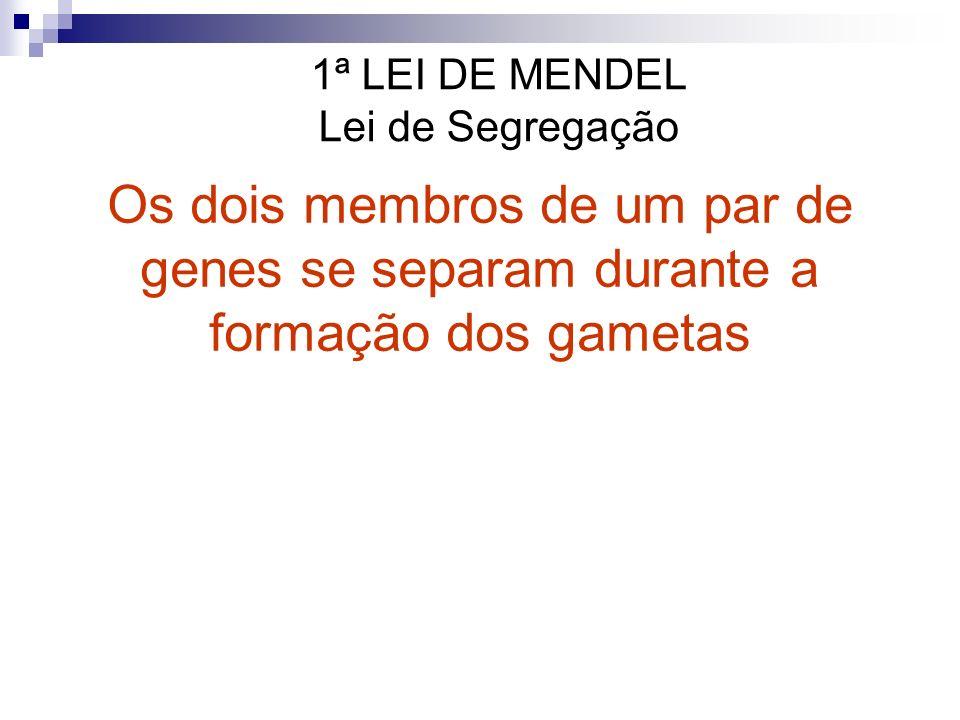 2ª Lei de Mendel: Segregação Independente de Genes Diferentes Os experimentos genéticos de Mendel incluíram o estudo de 2 ou mais características diferentes simultaneamente.