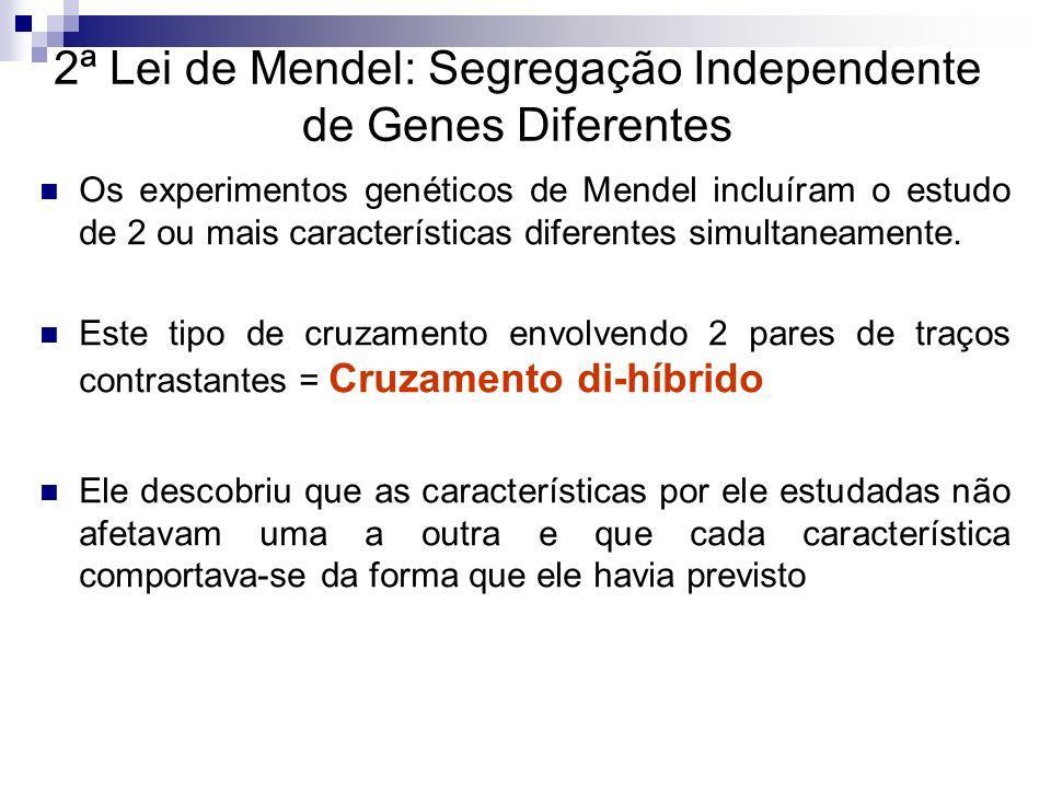 2ª Lei de Mendel: Segregação Independente de Genes Diferentes Na geração parental, Mendel cruzou plantas puras de ervilhas com sementes amarelas e lisas e plantas puras com sementes verdes e rugosas.