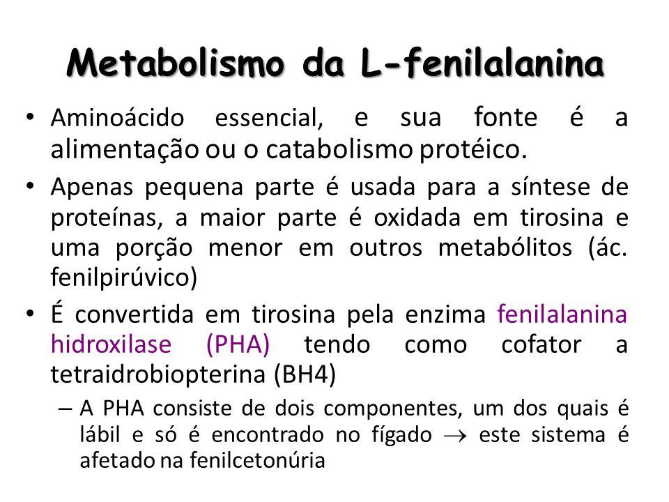 Fisiopatologia Hiperfenilalaninemia – É acompanhada por uma redução dos níveis cerebrais de tirosina e outros aminoácidos essenciais, causando: Distúrbio no sistema de síntese protéica Alterações no processo de mielinização