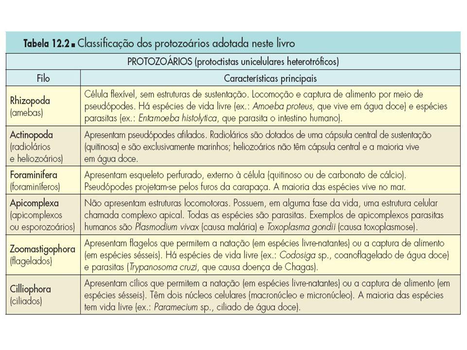 Classificação dos Protozoários O critério para classificação é o tipo de estrutura locomotora presente.