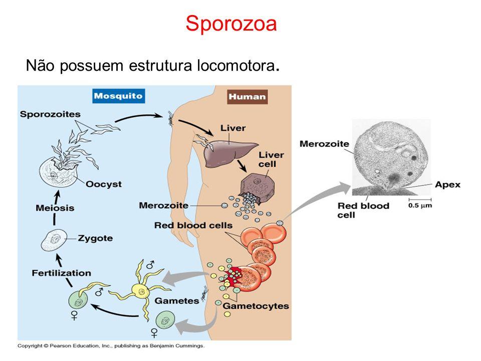 Distribuição geográfica da malária e seu agente transmissor. Anopheles sp.
