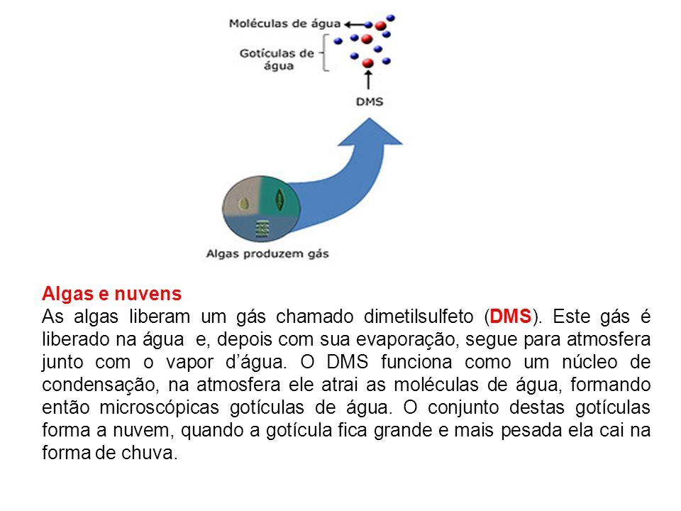 Reprodução das algas Alternância de gerações