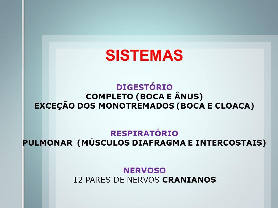 CIRCULATÓRIO FECHADA, DUPLA E COMPLETA (2A E 2V) (HEMÁCIAS ANUCLEADAS) AORTA VOLTADA PARA A ESQUERDA EXCREÇÃO RINS METANÉFRICOS (URÉIA) TEGUMENTAR PLURIESTRATIFICADO (COM HIPODERME OU TELA SUBCUTÂNEA)
