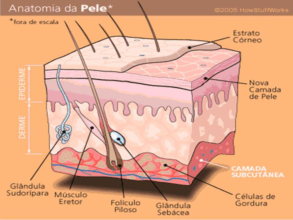 Chifre Corno os cornos são ósseos e crescem sobre o osso frontal; na girafa, são pequenos e cobertos por pele; nos rinocerontes, os cornos são de origem dérmica e estão colocados sobre os ossos nasal ou frontal, em posição média.