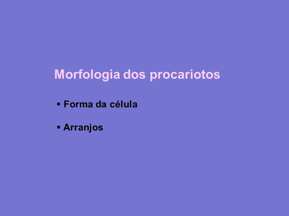 Morfologia dos procariotos: formas Cocos (Neisseria) Bacilos (Halobacterium/Salmonella) Vibrião (Bdellovibrio) Espirilo Espiroqueta (Leptospira) Pedunculada (Rhodomicrobium) Cianobactérias (Myxococcus)