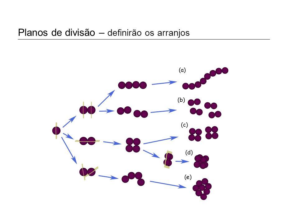 Morfologia dos procariotos: arranjos Estreptococo: Gênero Streptococcus Estáfilococo: Gênero Staphylococcus Coco: Gênero Methanococcus Sarcina: Gênero Methanosarcina Tétrade: Gênero Deinococcus Diplococo: Gênero Neisseria