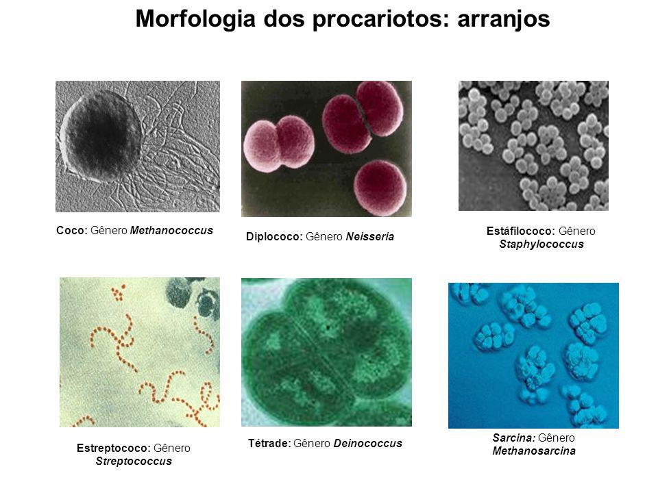 Estrutura da célula procariótica Parede celular A concentração de solutos dissolvidos gera alta pressão interna (pressão de turgor).