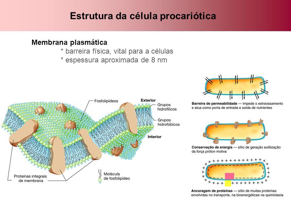 Composição química da membrana Domínio Bacteria: composição estável * bicamada composta de: - fosfolipídeos (glicerol + ácidos graxos + Pi: ligações éster) - proteínas transmembranares - hopanóides ( esteróis, resistência) em algumas espécies Domínio Archaea: composição variável * lipídeos: únicos na natureza ligações éter entre o glicerol e hidrocarbonetos (isopreno) podendo existir: - glicerol diéter - glicerol tetraéter - mista