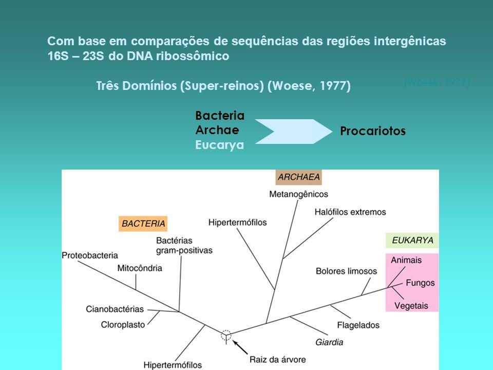 PropriedadeProcariotosEucariotos Domínios Bacteria e ArchaeEukarya: algas, fungos, protozoários, plantas e animais Estrutura e função do núcleo Membrana nuclear ausentepresente Nucléolo ausentepresente DNA Molécula única, sem histonas, plasmídeos freqüentesPresente em vários cromossomos, geralmente com histonas DivisãoSem mitoseMitose, aparelho mitótico com fuso microtubular Reprodução sexuadaProcesso fragmentário, sem meiose,apenas porções são montadas Processo regular, ocorrência de meiose, remontagem do genoma inteiro Estrutura e organização do citoplasma Membrana citoplasmática Geralmente sem esteróisEsteróis geralmente presentes Membranas internasRelativamente simples, restritas a poucos gruposComplexas, retículo endoplasmático, aparelho de Golgi Ribossomos 70 S80 S Organelas membranosas AusentesVárias Sistema respiratório Parte da membrana citoplasmáticaNas mitocôndrias Pigmentos fotossintetizantes Na membrana interna de clorossomas, cloroplastos ausentesEm cloroplastos Parede celular Presente (maioria), composta de peptidoglicano, outros polissacarídeos, proteínas e glicoproteínas Presente em plantas, algas e fungos; ausente nos animais, na maioria dos protozoários; geralmente polissacarídica Formas de motilidade Movimento flagelarFlagelos de dimensões sub- microscópicas, cada um composto de uma fibra de dimensão molecular; rotação Flagelos ou cílios; dimensões microscópicas; compostos de microtúbulos; sem rotação Movimento não flagelarDeslizamento; ou através das vesículas de gásCorrentes citoplasmáticas e movimento amebóide; deslizante MicrotúbulosausentesComuns, presentes em flagelos, cílios, corpos basais, fuso mitótico, centríolos Tamanho Geralmente menores que 2 m de diâmetroGeralmente 2 a mais de 100 m de diâmetro Cada domínio está associado a uma série de fenótipos, alguns únicos para cada domínio