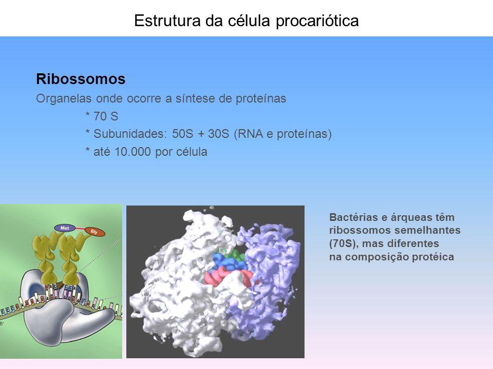 Estrutura da célula procariótica Flagelos * apêndices longos e finos (20 nm) * helicoidais * distribuídos em número variável * proteína: flagelina * estrutura: - corpo basal (motor) - gancho - filamento - O movimento de rotação é transmitido a partir do motor -1000 prótons para cada rotação - velocidade variável (até 12000 rpm) - A célula desloca-se com até 60 comprimentos celulares/s (guepardo 110 Km/h: 25 comprimentos/s) monotríquio lofotríquio anfitríquio peritríquio