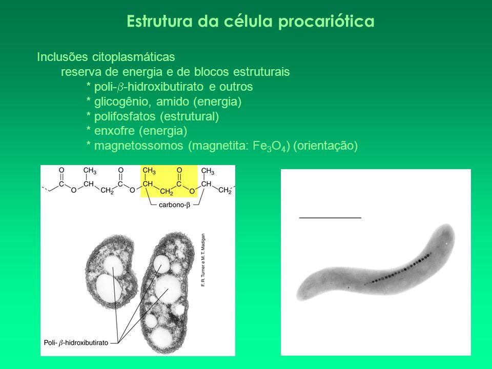 Estrutura da célula procariótica Vesículas de gás - procariotos aquáticos fotossintetizantes: ex.