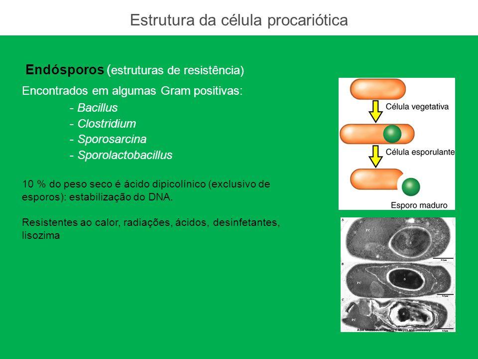 Ácido dipicolínico: exclusivo de esporos 10 % do peso seco Confere resistência ao calor e estabilização do DNA