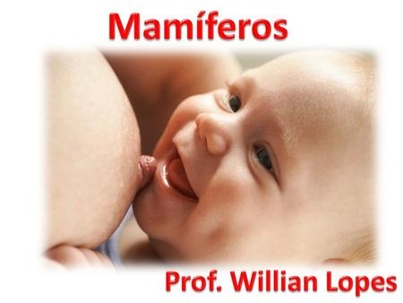 Mamíferos Prof. Willian Lopes.