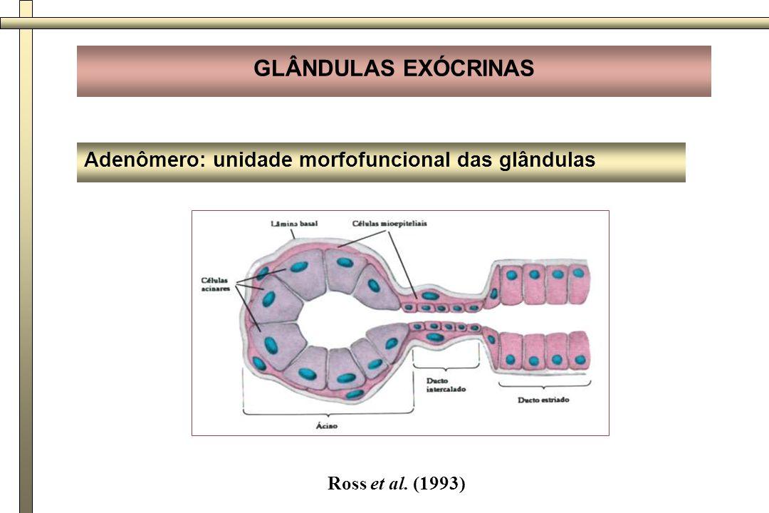 Adenômero: unidade morfofuncional das glândulas GLÂNDULAS EXÓCRINAS Junqueira, Carneiro (1999)