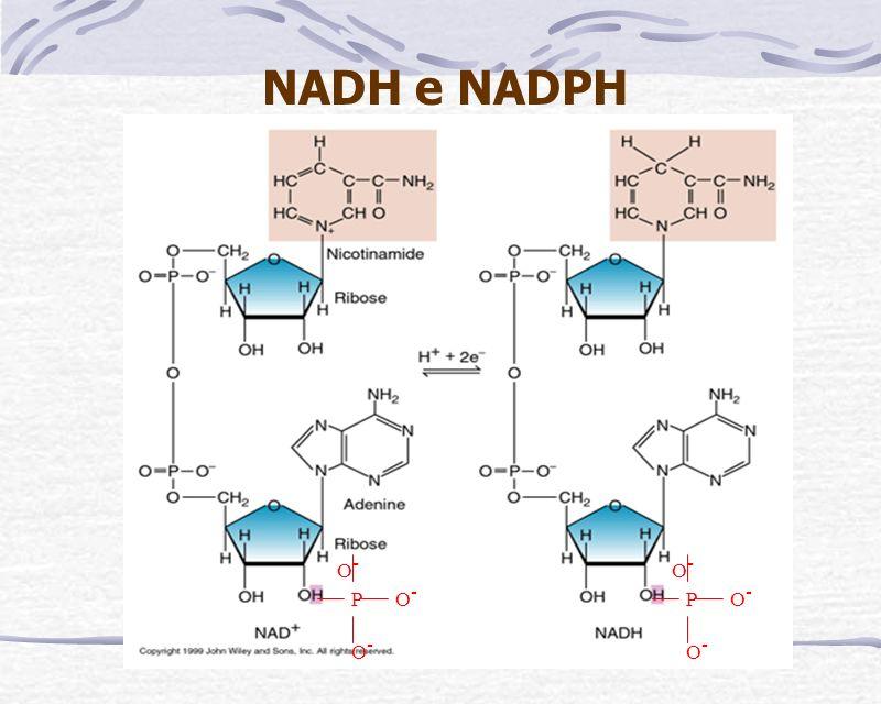 NADH e NADPH: São cofatores enzimáticos Determinação de Atividade Enzimática.