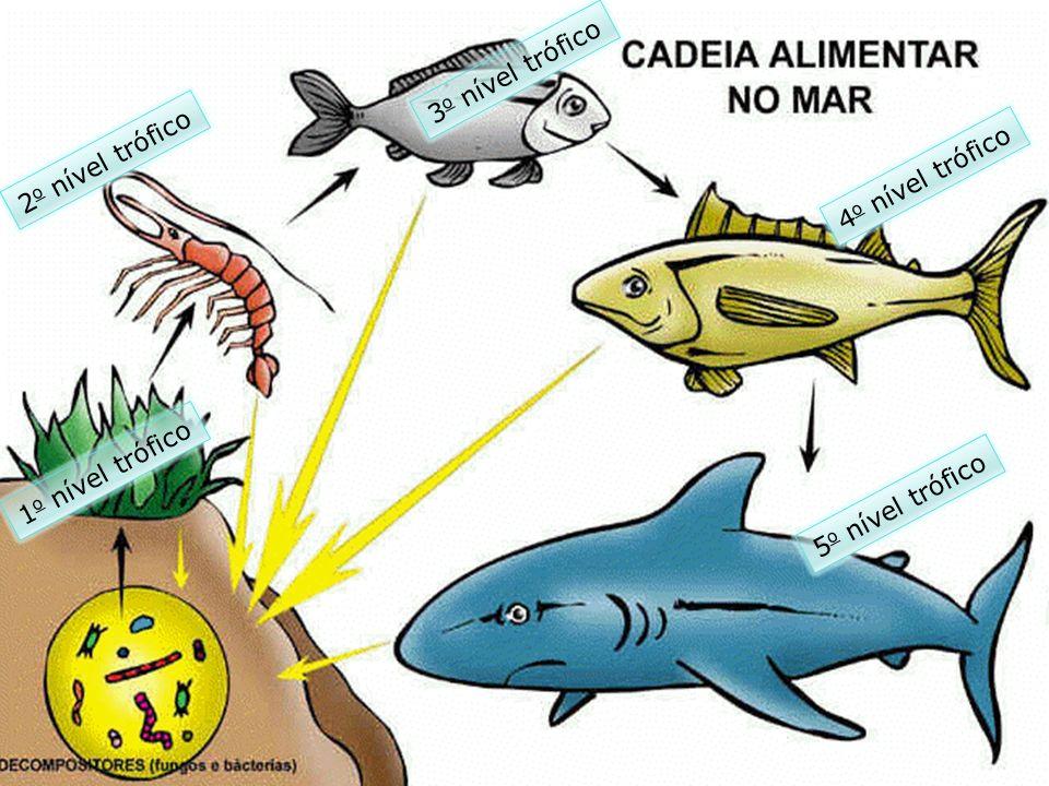 PRODUTORES - Fitoplancton CONSUMIDOR PRIMÁRIO - Zooplancton CONSUMIDOR SECUNDÁRIO CONSUMIDOR TERCEÁRIO CONSUMIDOR QUATERNÁRIO Cadeia Alimentar Aquática