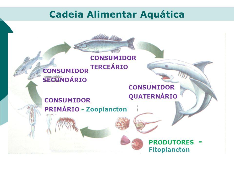 Produtor Herbívoro Carnívoro Herbívoro Carnívoro Nicho ecológico – papel do ser vivo na comunidade.