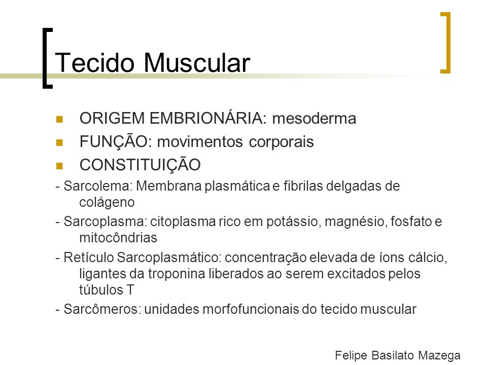 Tecido Muscular Estriado Esquelético MORFOLOGIA: células cilíndricas longas e multinucleadas, que apresentam estriações transversais e se estendem por todo o comprimento do músculo CONTRAÇÃO: rápida, vigorosa, descontínua e sujeita a controle voluntário INERVAÇÃO: cada fibra muscular recebe uma terminação nervosa ORGANIZAÇÃO: músculo – fascículo muscular – fibra muscular – miofibrila - sarcômeros Felipe Basilato Mazega