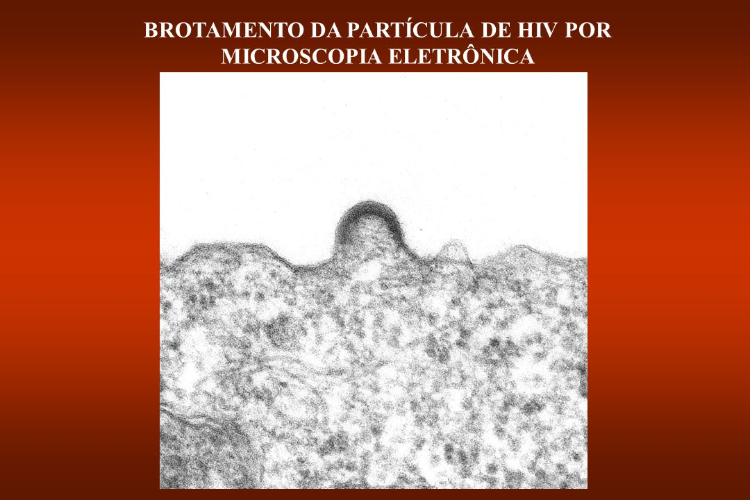 AVIÁRIO HTLV-II HTLV- I FELINO MURINO Oncovírus Lentivírus (gênero) Espumivírus Retrovírus (família) EIAV CAEV HIV-2 SIV HIV-1 HFV SFV Esquema das relações evolutivas entre os retrovírus