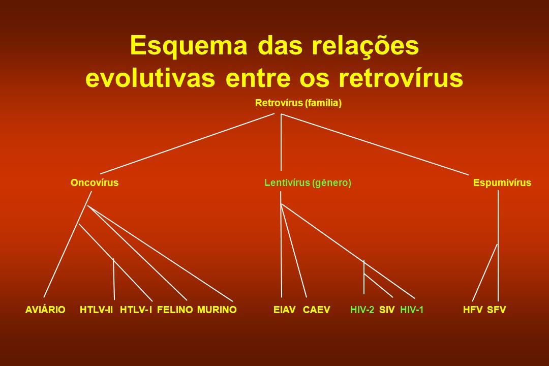 Características dos lentivírus