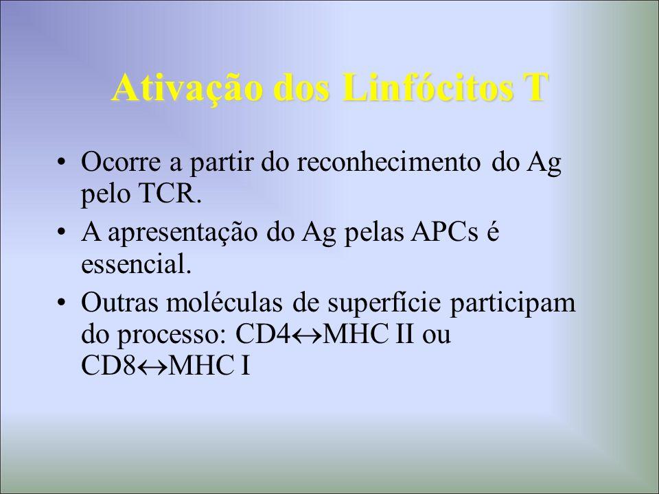 Mecanismos Efetores A partir do estímulo antigênico, mediado pelas APCs (M e DCs), os LT em repouso proliferam (expansão clonal) e se diferenciam em: –LT efetores LTc – citotoxicidade LTh – citocinas –LT de memória