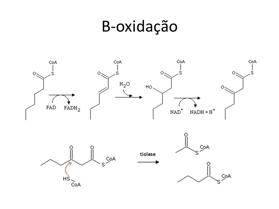 B-oxidação de ácidos graxos insaturados Dupla ligação em carbono ímpar: Δ 3, Δ 2 -enoil-CoA isomerase