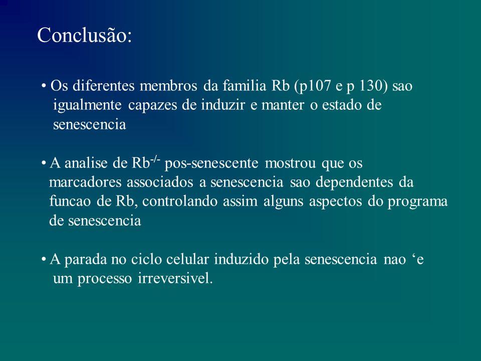 Para ocorrer a compensacao funcional de Rb e preciso uma ausencia mais prolongada de pRb e um reset mais complexo da maquinaria do ciclo celular.