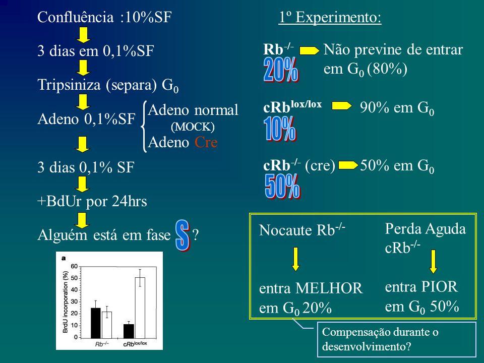 cRb lox/lox p21 p16 alvosE2F (CiclinaE, MCM6) p107 p19 p130 cRb -/- p21 p16 alvosE2F p107 p19 p130 ============ = Nocaute (Rb -/- ) Este para em G 0 .