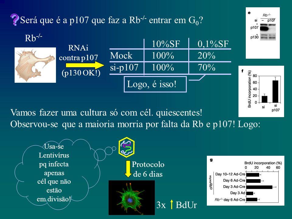 E RNAi para p19.E na cRb lox/lox cRb -/- .