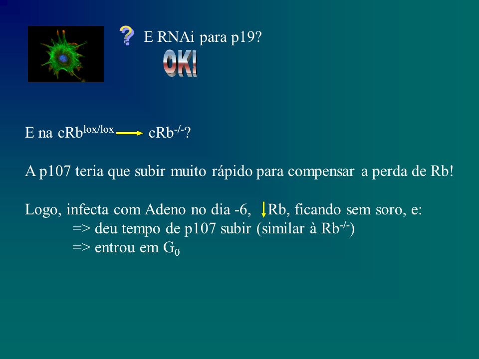 Senescência Rb -/- fica senescente Sem Rb, Sem p107, sem p130 => Não fica Mais um caso de sobreposição Só que...