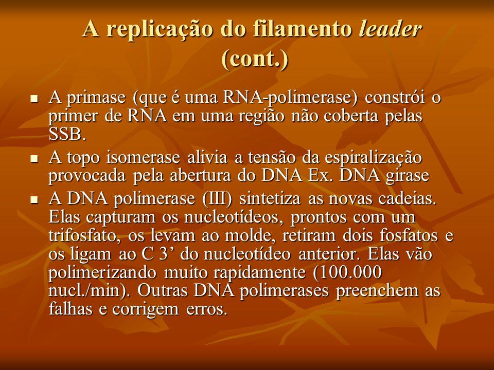 A replicação do filamento lagging (replicação descontínua) Os Fragmentos de Okazaki (complementam o filamento lagging) Os Fragmentos de Okazaki (complementam o filamento lagging) É formado um primer de RNA pela enzima Primase É formado um primer de RNA pela enzima Primase Os primers são continuados pela DNA polimerase III até o primer do próximo fragmento de Okasaki.