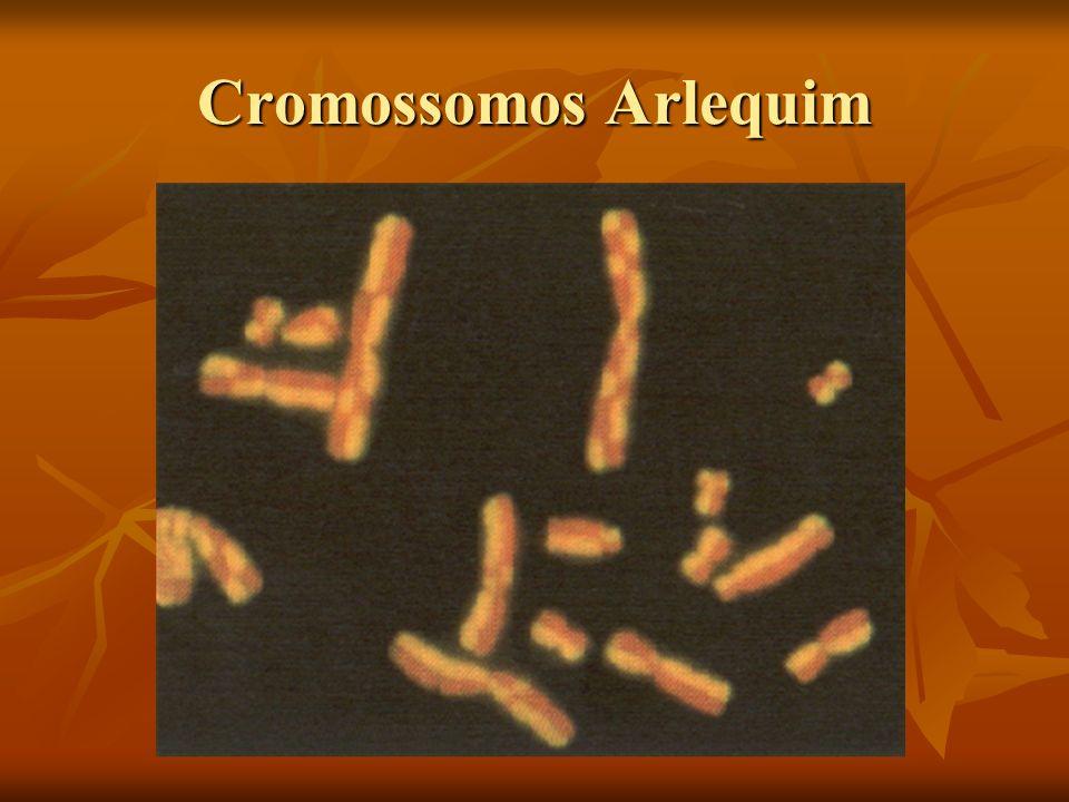 A replicação e E.coli tem uma origem apenas Autoradiografias feitas por J.