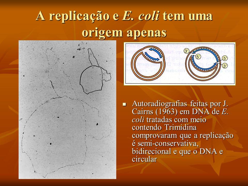 Nos eucariotos são abertos várias bolhas de replicação ou replicons