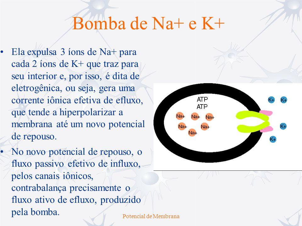 Potencial de Membrana Embora os fluxos de Na + e K + definam o valor do potencial de repouso da membrana, V m, este não é igual a E K nem a E Na, mas fica entre eles.