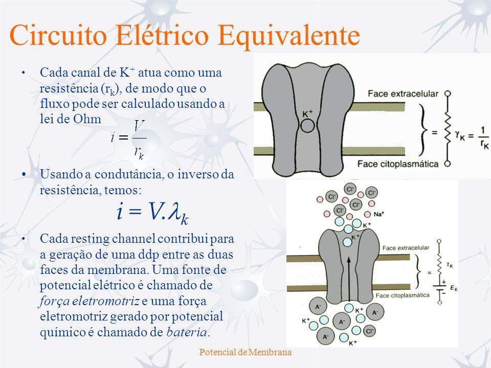 Potencial de Membrana Uma célula contém muitos resting channels de K +, e todos estes podem ser combinados em um mesmo circuito equivalente, consistindo em um condutor em série com uma bateria.