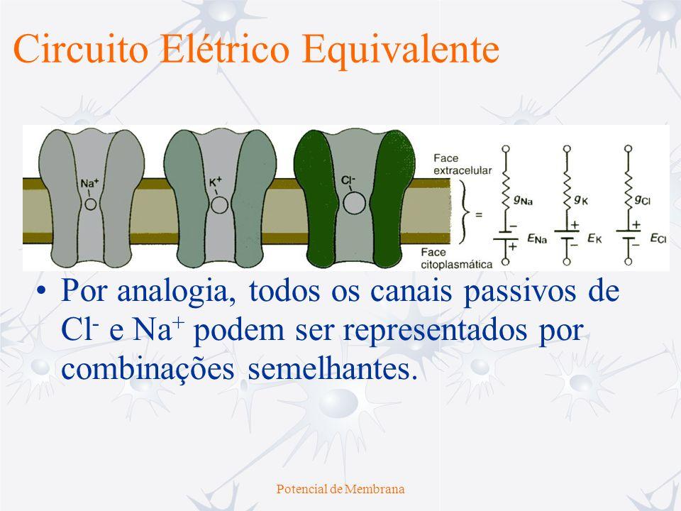 Potencial de Membrana O fluxo passivo de corrente pode ser modelado por um circuito elétrico equivalente que inclui elementos representativos dos canais íons-seletivos da membrana e por vias de curto-circuito do líquido extra-celular e do citoplasma Face Extracelular Face Intracelular Circuito Elétrico Equivalente