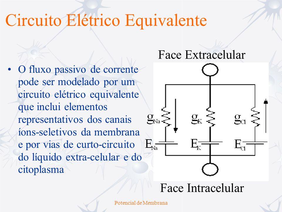 Potencial de Membrana Circuito Elétrico Equivalente Os fluxos estáveis de íons de Na + e K + são contrabalançados pelos fluxos iônicos ativos, mantidos pela bomba de Na + -K +.