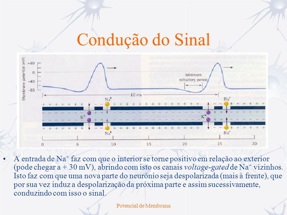 Potencial de Membrana Padrões de Repetição dos Potenciais de Ação Ao se injetar um certo nível de corrente em um determinado neurônio, ele responde de forma característica, que também depende do potencial de repouso da membrana Ou seja, um mesmo neurônio pode exibir diferentes padrões de repetição de potenciais de ação