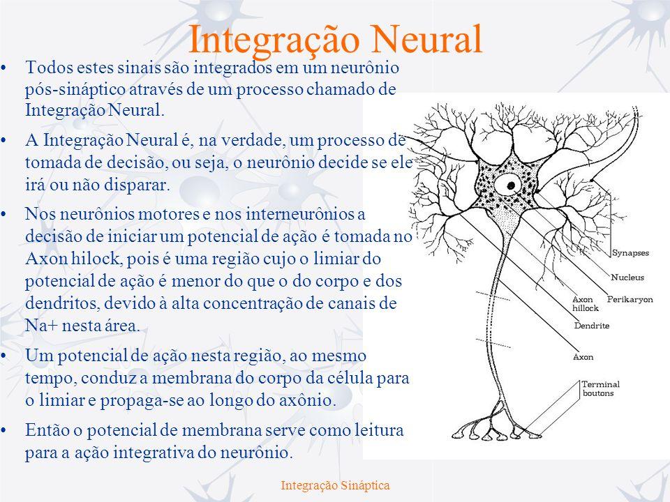 Integração Temporal e Espacial A integração neural é criticamente afetada por duas propriedades passivas da membrana: –Somação Temporal – ocorre quando dois ou mais estímulos sublimiares são disparados próximos no tempo.