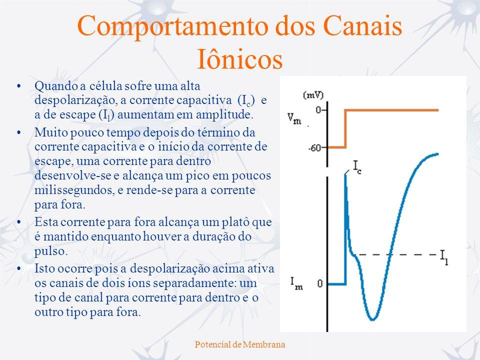 Potencial de Membrana Comportamento dos Canais Iônicos Hodgkin e Andrew Huxley conseguiram estudar separadamente o comportamento da corrente gerada pelos canais de K + e pelos canais de Na + utilizando Tetrodoxina (toxina encontrada nos peixes balões, que bloqueiam os canais de Na + ) e Tetraetilamônio (bloqueador seletivos de alguns canais de K + ).