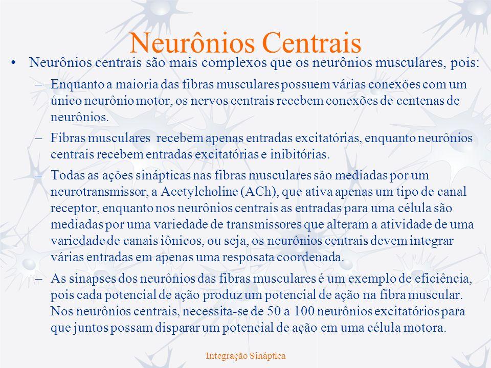 Integração Sináptica Sinais Excitatórios e Inibitórios Passando corrente suficiente através de um microeletrodo no corpo de um neurônio strectch- receptor na raiz do gânglio dorsal produz um pequeno Potencial Excitatório Pós-sináptico (EPSP) no neurônio motor que se comunica com o mesmo neurônio sensor.