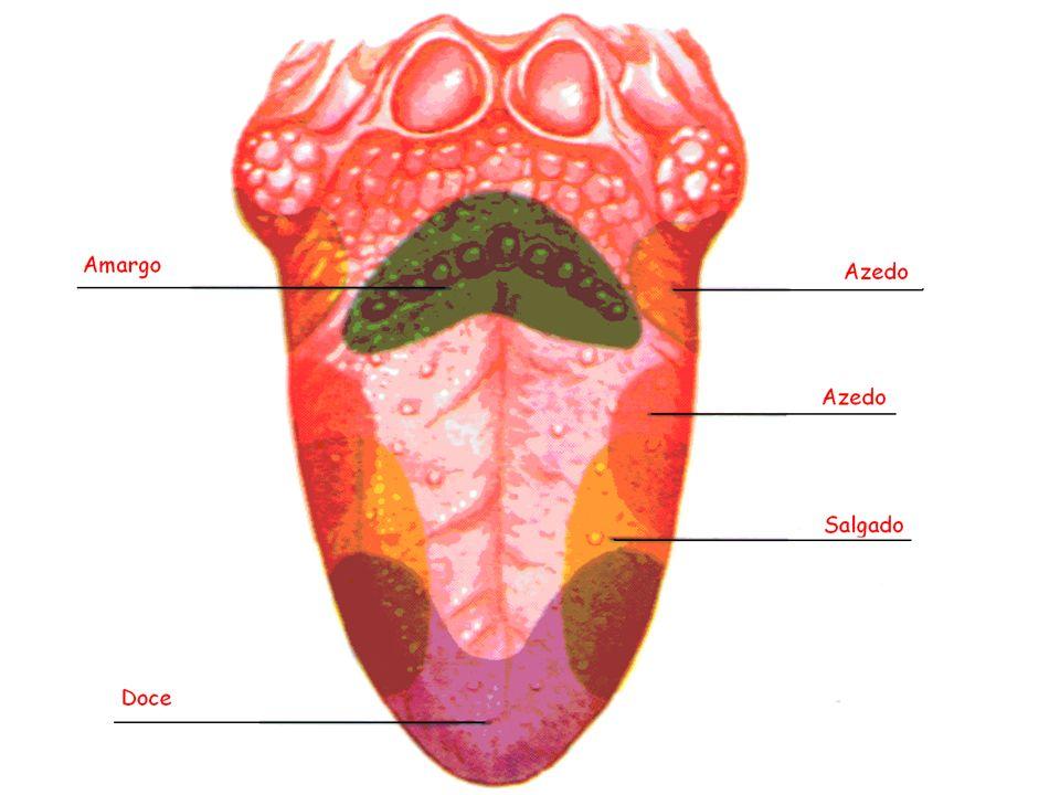 a) Função da Boca Mastigação Insalivação