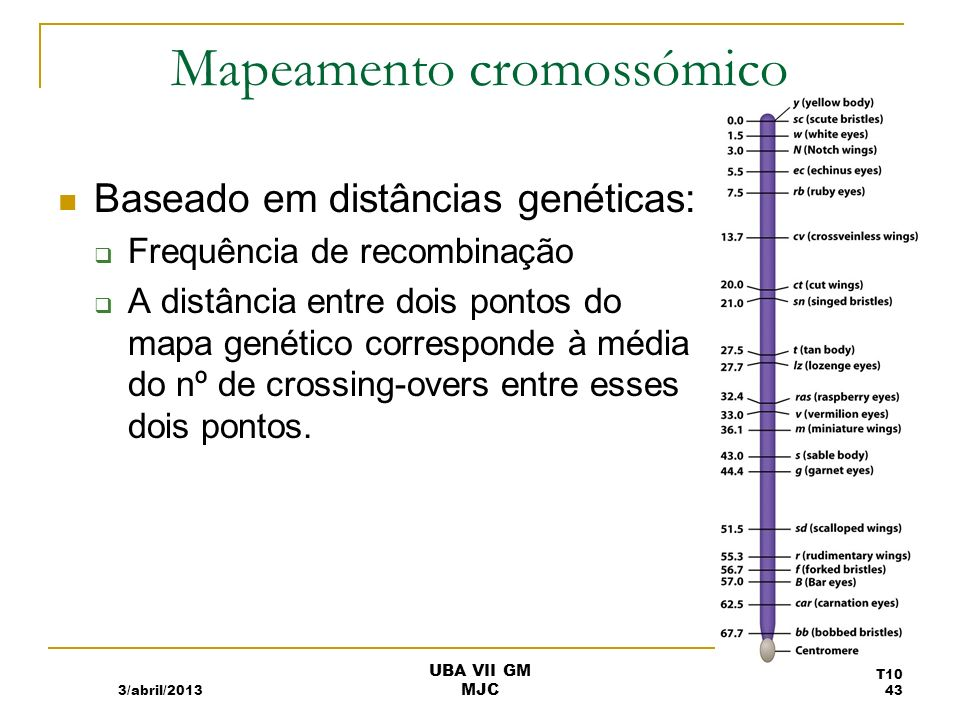 Frequência de recombinação e distâncias nos mapas 3/abril/2013 T10 44 UBA VII GM MJC
