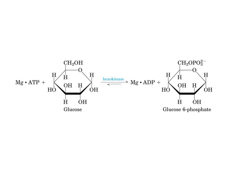 HEXOQUINASE Sem glicose Com glicose