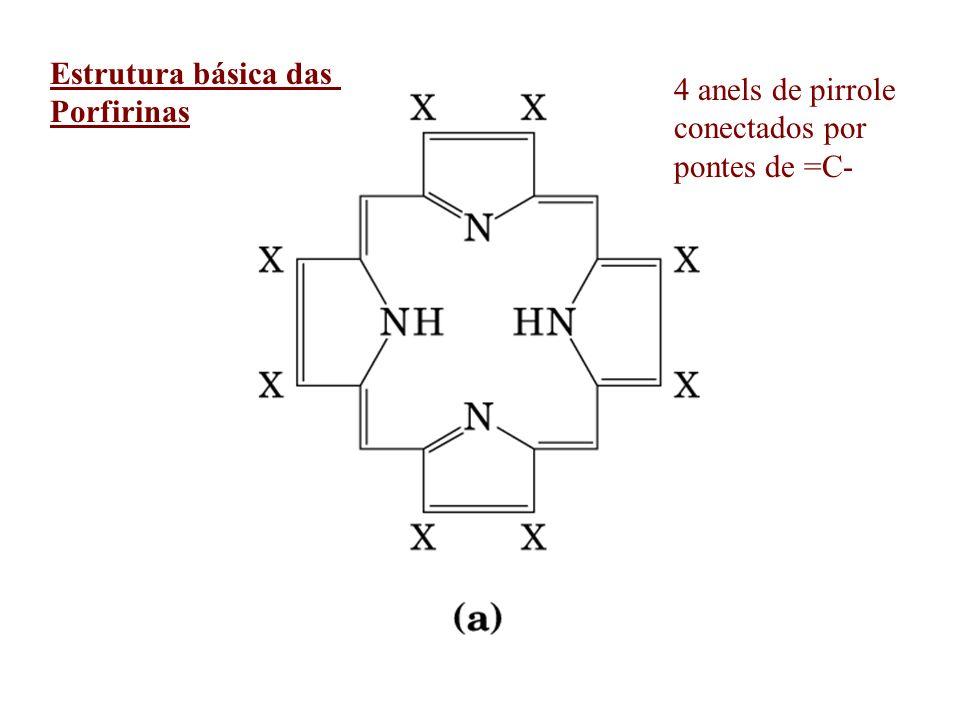 HEME = Prorporfirina IX